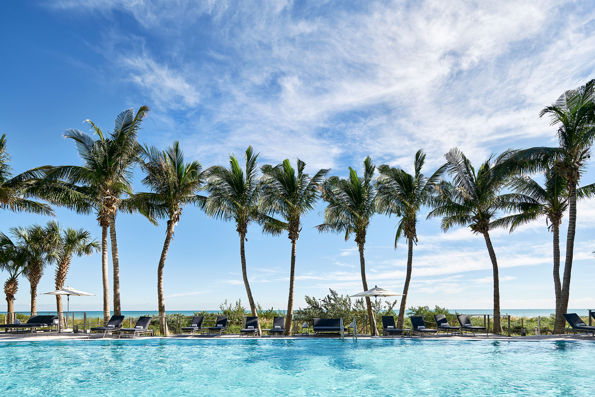 landscape shot of a line of palm trees against the blue sky. Beneath the palm trees and umbrellas and loungers that line a pool. The ocean is visible in the background.